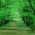 Beechwood Grove by Bob Kemp