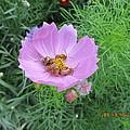 Bees Feeding by Tina M Wenger
