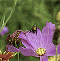 Beetlejuice by Trish Tritz
