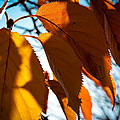 Before The Leaves Fall by David Patterson