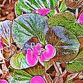 Begonia by Ericamaxine Price