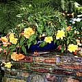 Begonia by Tammy Wetzel