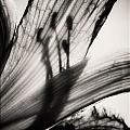 Behind The Petals Black And White by Sarah Wiggins