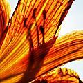 Behind The Petals by Sarah Wiggins