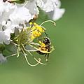 Being A Bee by Travis Truelove