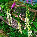 Bench Among The Foxgloves by Julie Dant