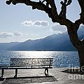 Bench And Tree On An Alpine Lake by Mats Silvan