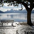 Bench And Tree On The Lakefront by Mats Silvan