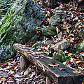 Bench Beside The Trail To Cascade Falls by James Woody