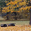 Bench In The Autumn Landscape by Michal Boubin