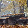 Benches And Table In Autumn by Mats Silvan