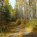 Bend In The Trail by Jim Sauchyn