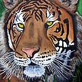 Bengal Tiger by Emmanuel Turner