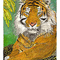 Bengal Tiger With Green Eyes by Jack Pumphrey