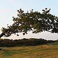 Bent Tree by Katie Bingham