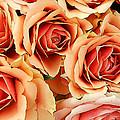 Bergen Roses by KG Thienemann