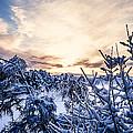 Bergen Winter by Hakon Soreide