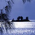 Bermuda Blues by Mike Flynn