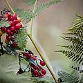 Berries by Martin Cooper