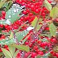 Berries On Rain by Douglass Reynolds