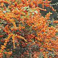 Berry Orange by Karen Wagner