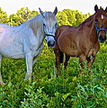 Best Buds Out To Pasture by George Ramos