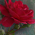 Betty's Red Rose II With Decorations by Debbie Portwood