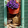 Between Shutters by Lainie Wrightson
