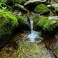 Between The Moss by Rachel Cohen