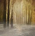 Beware Misty Woodland Path by Meirion Matthias