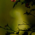 Beyond The Rose by Kim Henderson