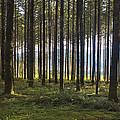 Beyond The Woods by Belinda Greb