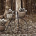 Bicycle Built For Three by Douglas Barnett