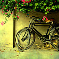 Bicycles by Atul Tater