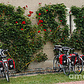 Bicycles Parked By The Wall by Louise Heusinkveld