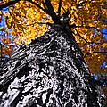 Big Autumn Tree In Fall Park by Elena Elisseeva