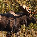 Big Bull by Doug Lloyd