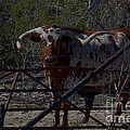 Big Bull Long Horn by Donna Brown