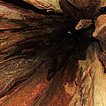 Big Cedar by Michael Merry