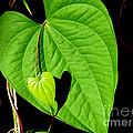 Big Heart Little Heart by David Weeks
