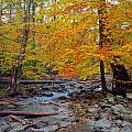Big Hunting Creek Down Stream From Cunningham Falls by Mark Dodd