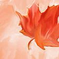 Big Leaf Maple by Heidi Smith