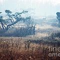 Big Meadows In Winter by Thomas R Fletcher