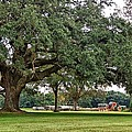 Big Oak And The Tractors by Michael Thomas