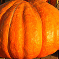 Big Orange Pumpkin by LeeAnn McLaneGoetz McLaneGoetzStudioLLCcom