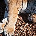 Big Paws by Colleen Coccia