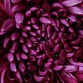 Big Wet Purple by Mark Holbrook