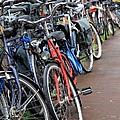 Bike Frenzy by Sophie Vigneault