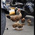 Biker Chix by Christine Stonebridge