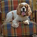Bingo And His Chair by Debbie Portwood